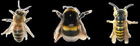 Tree Bees transparent