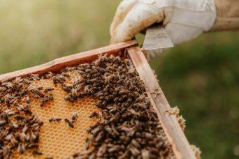 Hive Tray